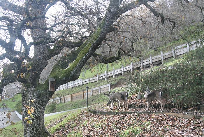 Deer n'trees